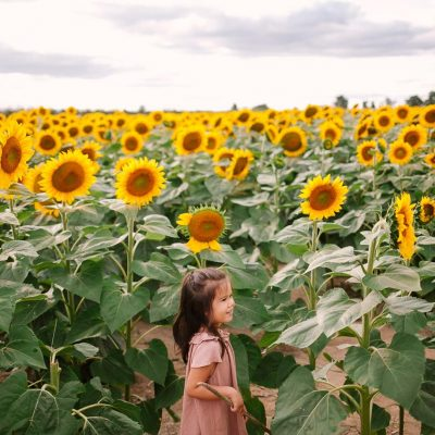 Sunflower Photoshoot in Caledon with our Family