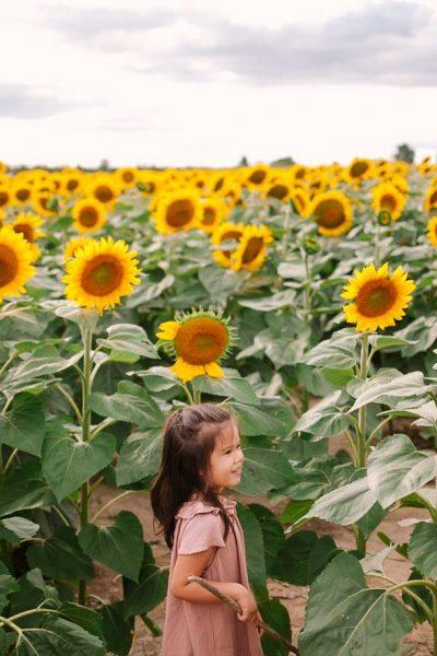 Caledon Toronto sunflower photographer