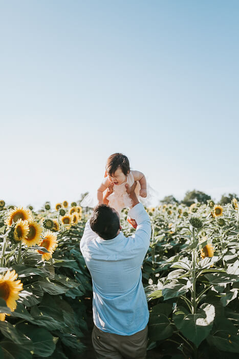 Sunflower Minis