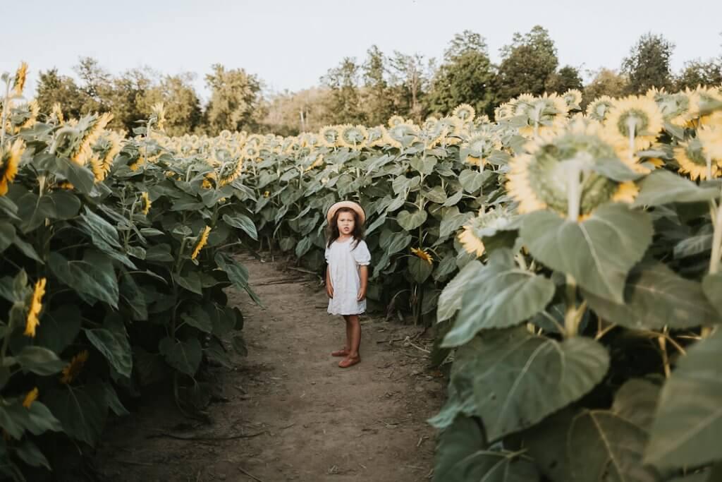 sunflower mini session photographer