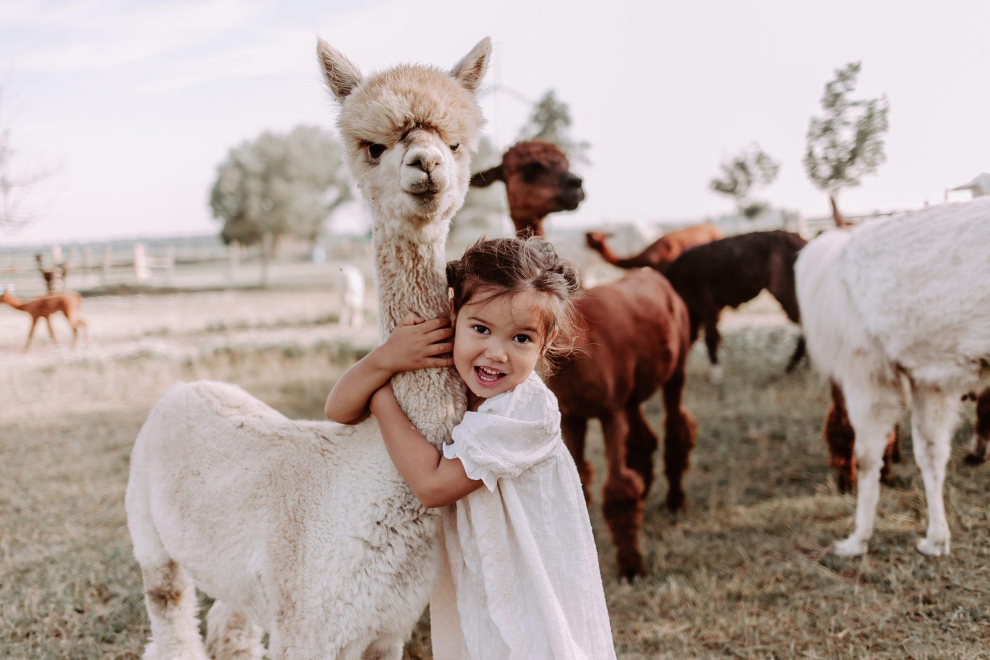 llama and alpaca farm minis